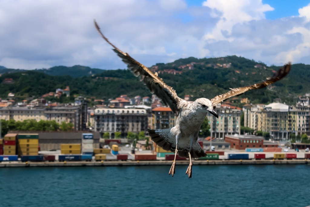 Gabbiani a La Spezia
